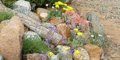 california native plants garden tips. Black Bedroom Furniture Sets. Home Design Ideas