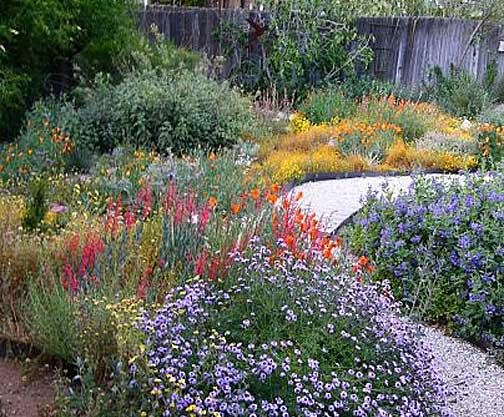california native plants garden tips