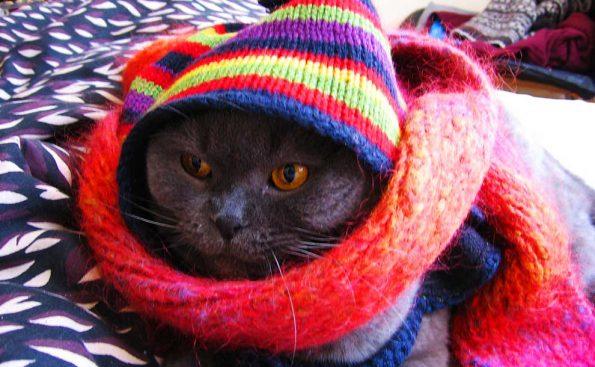 Knitting for your pet (Photo - Iouri Goussev).